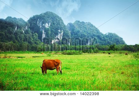 Grazing cow on a valley with green meadow and mountains on a horizon poster