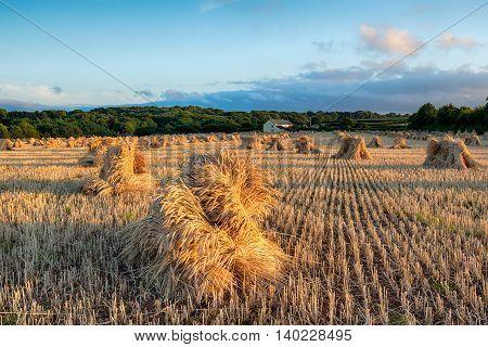 Harvest Time In Devon