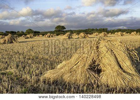 Devonshire Harvest