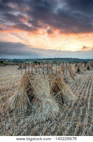 Barley Stooks
