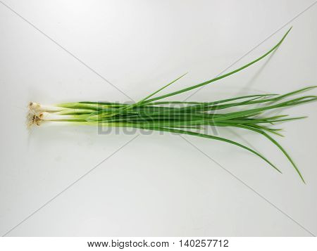 scallion spring-onion green-onion Shallot alliaceous food herb Medicinal plants seasoning ingredient flavouring spice
