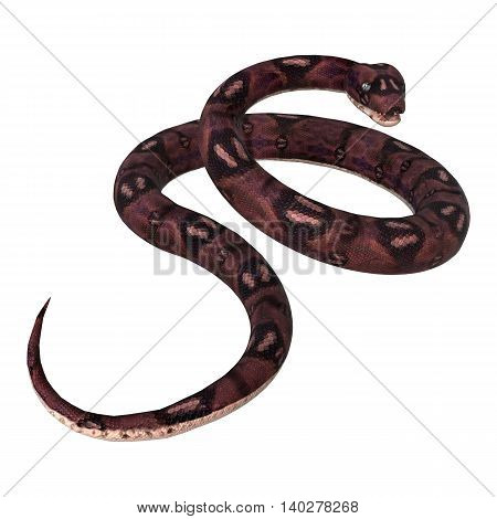 3D Rendering  Anaconda Snake On White