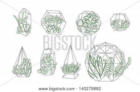 Succulent in terrarium line sketch illustration set