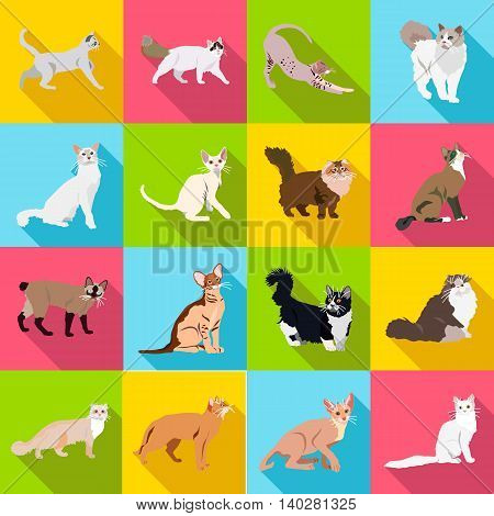 Set Cats Of Different Breeds With Long Shadow