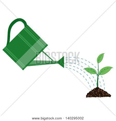 Young plant with watering can on the white background