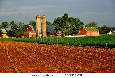 Lancaster County Pennsylvania - June 5 2015: Newly planted cornfield and an Amish farm with twin silos barns and sheds
