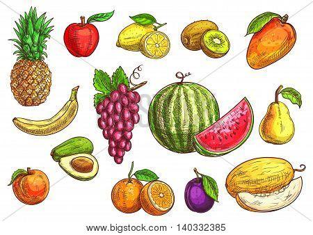 Fruits set. Sketch hand drawn illustration of isolated vector tropical and exotic fruits. Color drawings of pineapple, banana, apple, avocado, peach, red grape, lemon, orange, watermelon, kiwi, plum, mango pear melon