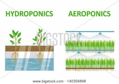 Aeroponic and hydroponic systems. Colored flat vector illustration