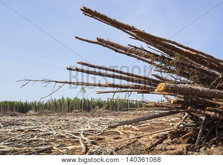 Piles of timber at a clear cut that is in Saskatchewan Canada