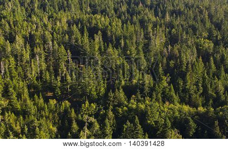 panorama view of green woods in sunlight