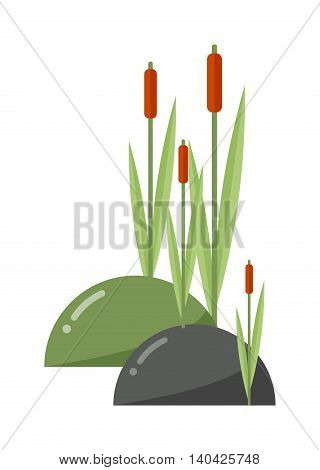 Reeds and cattail plant isolated on white background. Vector cattail reeds and cattails outdoor garden haulm cattail reeds. Cane leaf marsh flora bulrush cattail reeds and river cattail reeds.