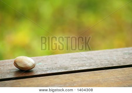 A seashell on a wooden table with blur background poster