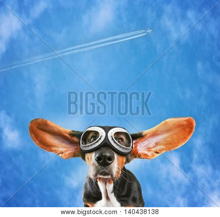 a basset hound wearing pilot goggles with his ears flying away like a plane with a jet in the background with contrails on a pretty blue cloudy sky