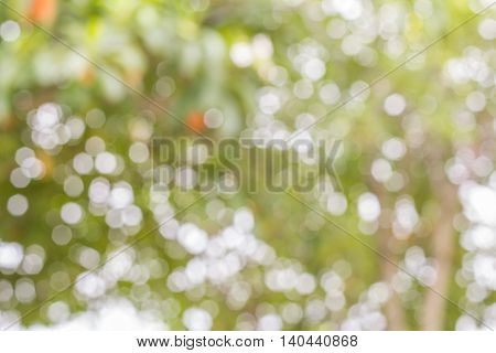 Background of bright green trees during the day.
