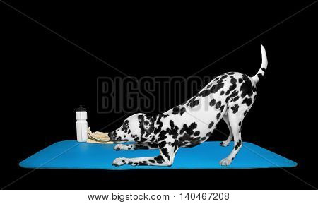 Dog doing yoga or pilates exercise -- isolated on black