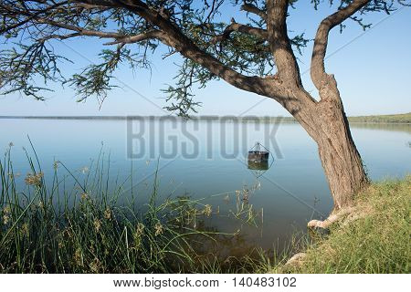 A fish basket is secured to the bottom of the dam.nearby an acacia tree withing the calm waters
