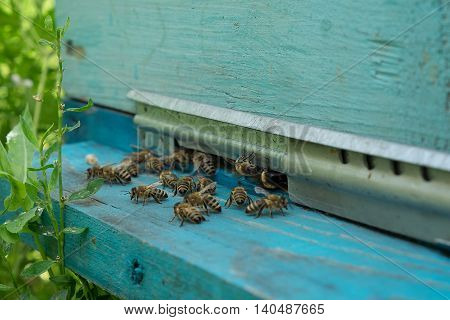 Bees Entering The Hive. White Beehive