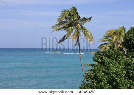Palm tree and Pacific Ocean