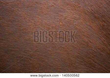 Wet fur skin of red horse as background