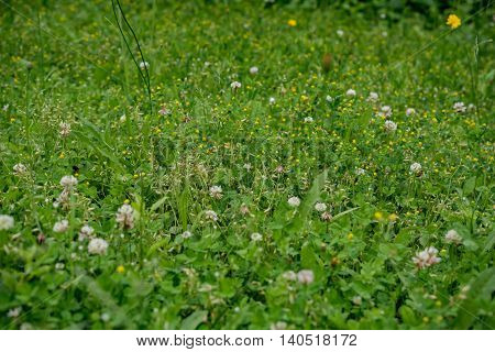 summer green meadow background in southern Germany