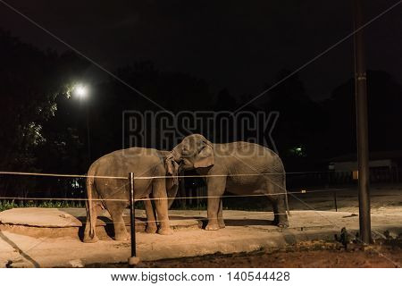 elephants playing at the zoo at night