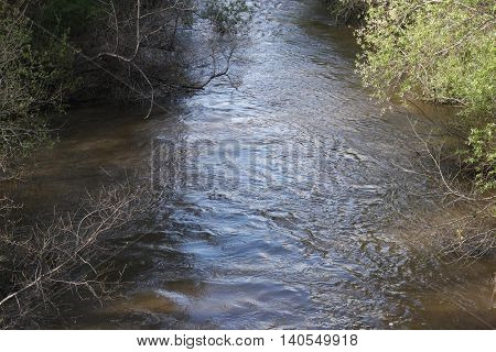 This is an image of the Carmel River running through Carmel Valley on a clear sunny day in California, U.S.A.