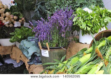 Lavender for sale at a Farmer's Market