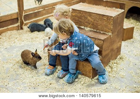 Children Play With The Rabbits In The Petting Zoo