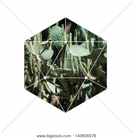 Trendy exotic image of a cactus in a geometric hexagon divided into triangles on a white background.