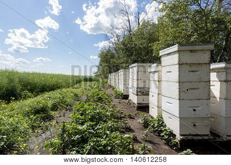 Stacks of bee hives on the edge of a farm field