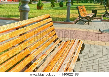 Empty wooden bench in town square near the alley in bright sunlight