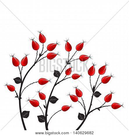 Vector illustration rose hip, silhouette autumn bush