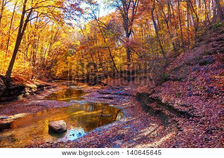 A woodland creek meanders in a shady ravine under brilliantly lit autumn trees