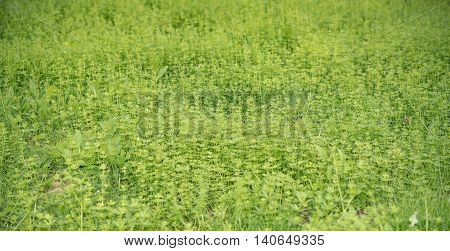 flowers in green grass close up in Germany
