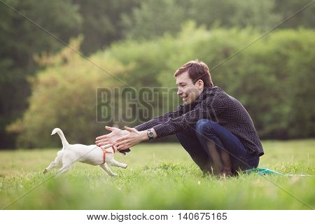 Jack Russell Parson Terrier Sitting On Grass