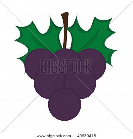 flat design grape bunch icon vector illustration