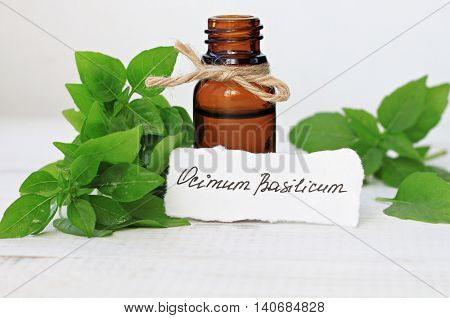 Bottle of essential basil oil. Fresh green Ocimum Basilicum leaves, handwritten text paper label.