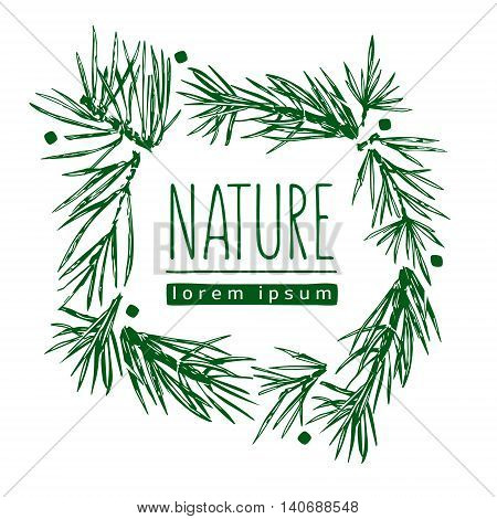 Botanical illustration with pine branches pine tree hand drawn