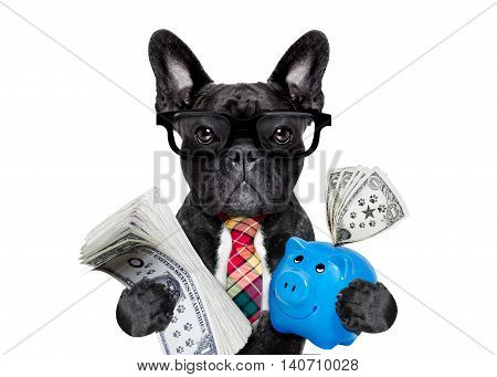 Dog Money And Piggy Bank