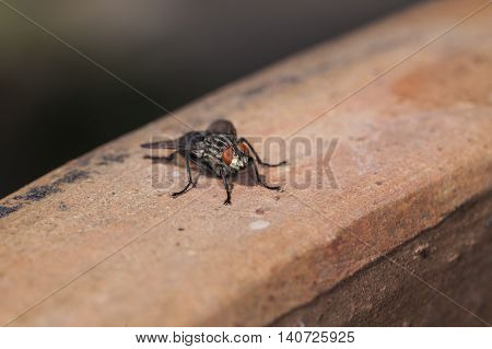 Portrait Of A Sitting Fly