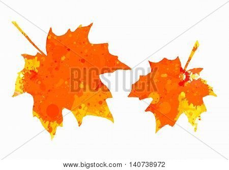 Bright orange watercolor autumn maple leaves isolated over white background.