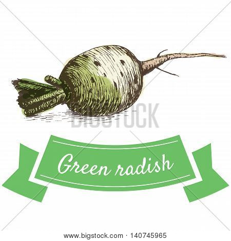 Vector illustration colorful set with green radish. Illustration sorts of vegetables on white background