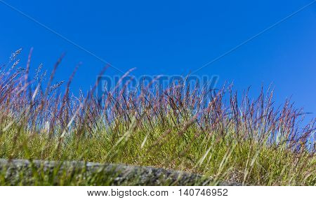 green grass flower with blue sky on sky cackground