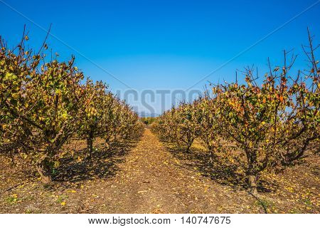 The reserve of migratory birds in the Upper Galilee. Straight rows of fruit trees surrounds Lake Hula