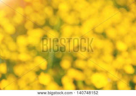 Blur yellow flower background out focus in summer with light.