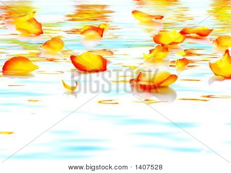 Beautiful Rose Petals On The Float