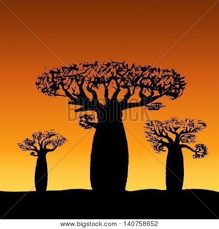 vector illustration three baobabs at sunset or sunrise