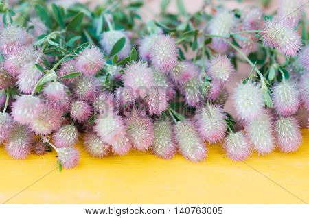 Bouquet of wild fluffy flowers on a wooden yellow surface. Trifolium arvense.