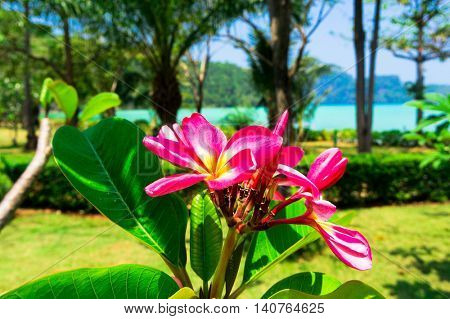 Tropical Verdure Flower Perspective