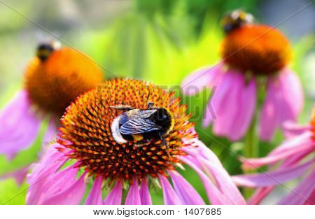 Bees On The Flowers